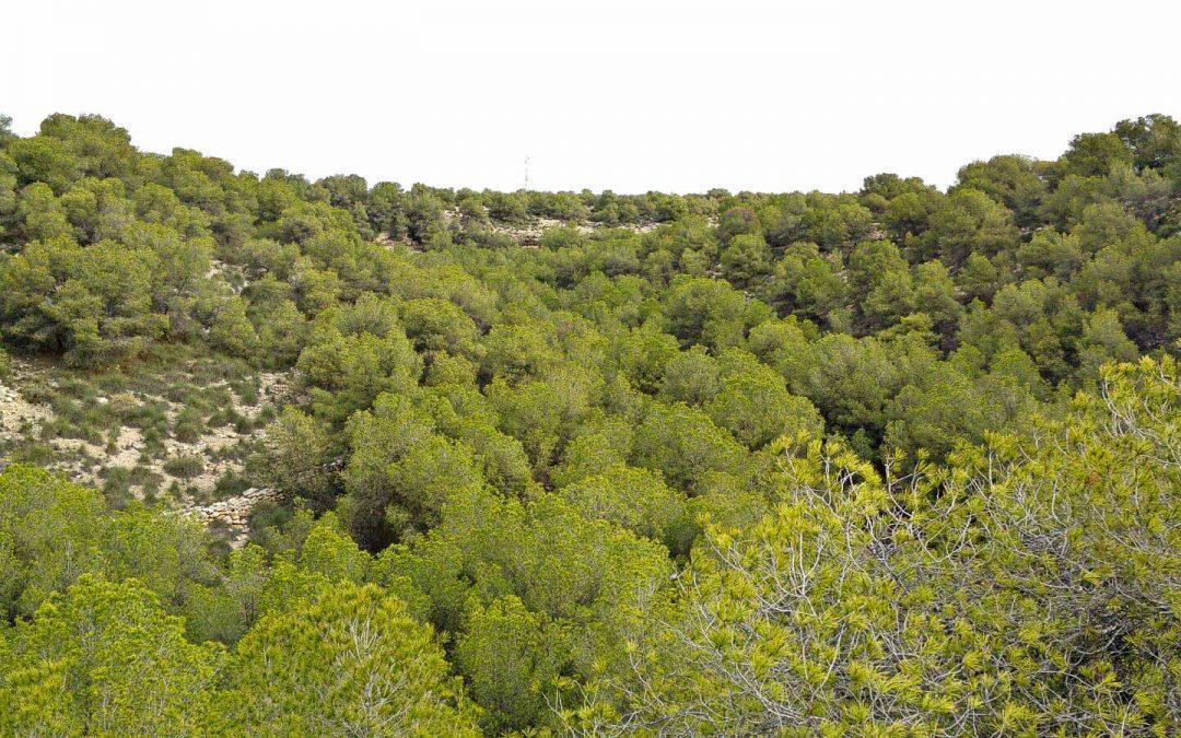 La Conselleria dóna llum verda a la declaració de Paratge Natural Municipal de la Serra i el Cap