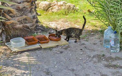 El Ayuntamiento recibe una subvención para controlar las colonias de gatos