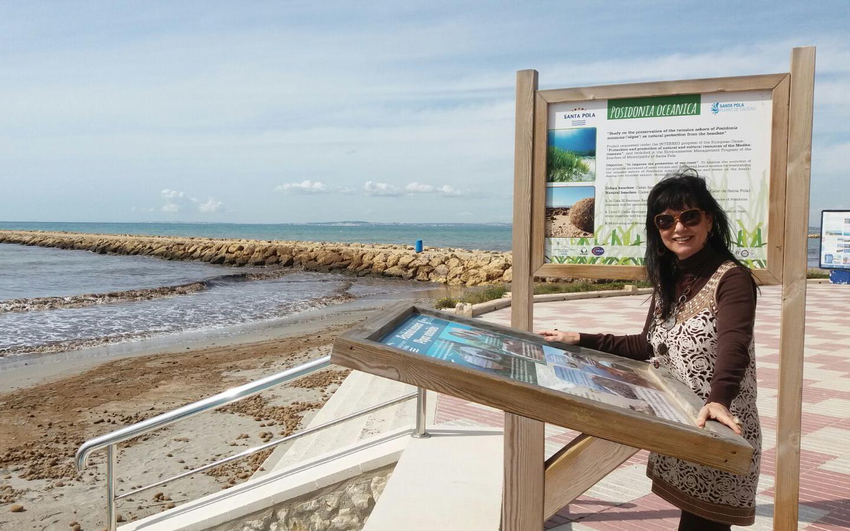 El manteniment dels cúmuls de Posidonia durant la temporada baixa afavorix la protecció de les platges