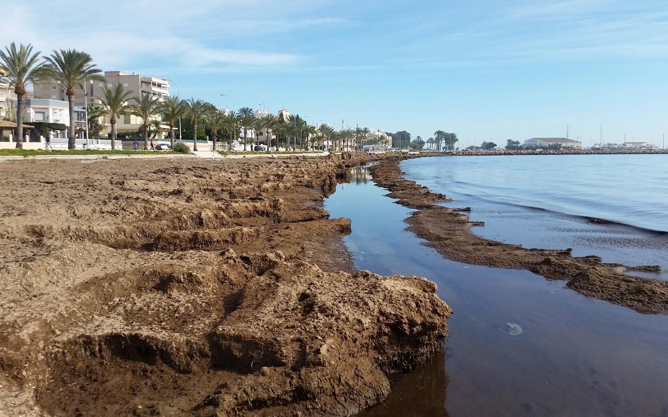Santa Pola participa en un projecte on la posidònia juga un paper clau contra el canvi climàtic