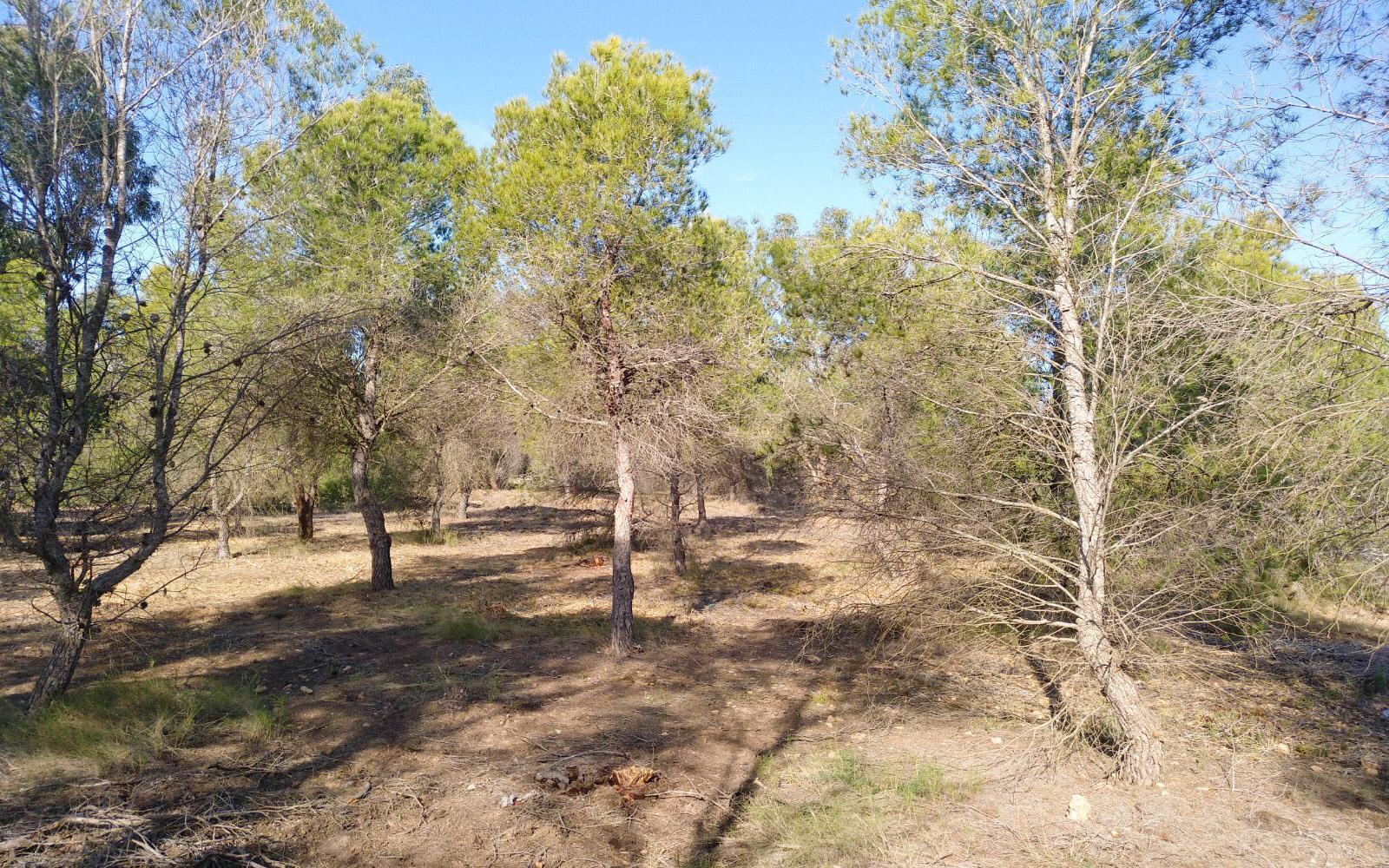 La Concejalía de Sostenibilidad ha conseguido una subvención para la mejora forestal de la Sierra de Santa Pola