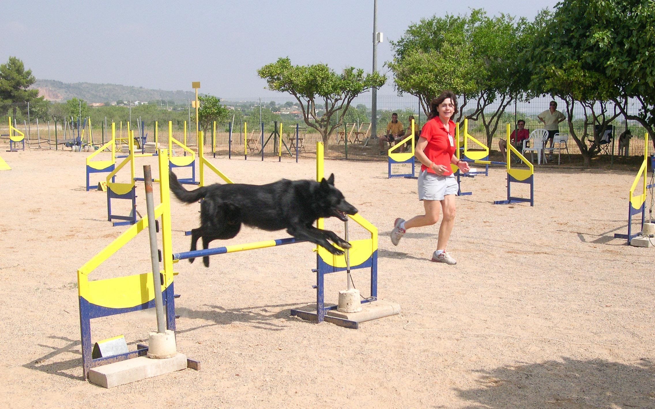 El VIII Trofeo de Agilidad Canina Villa de Santa Pola llega el 24 y 25 de noviembre con la colaboración de la Concejalía de Deportes