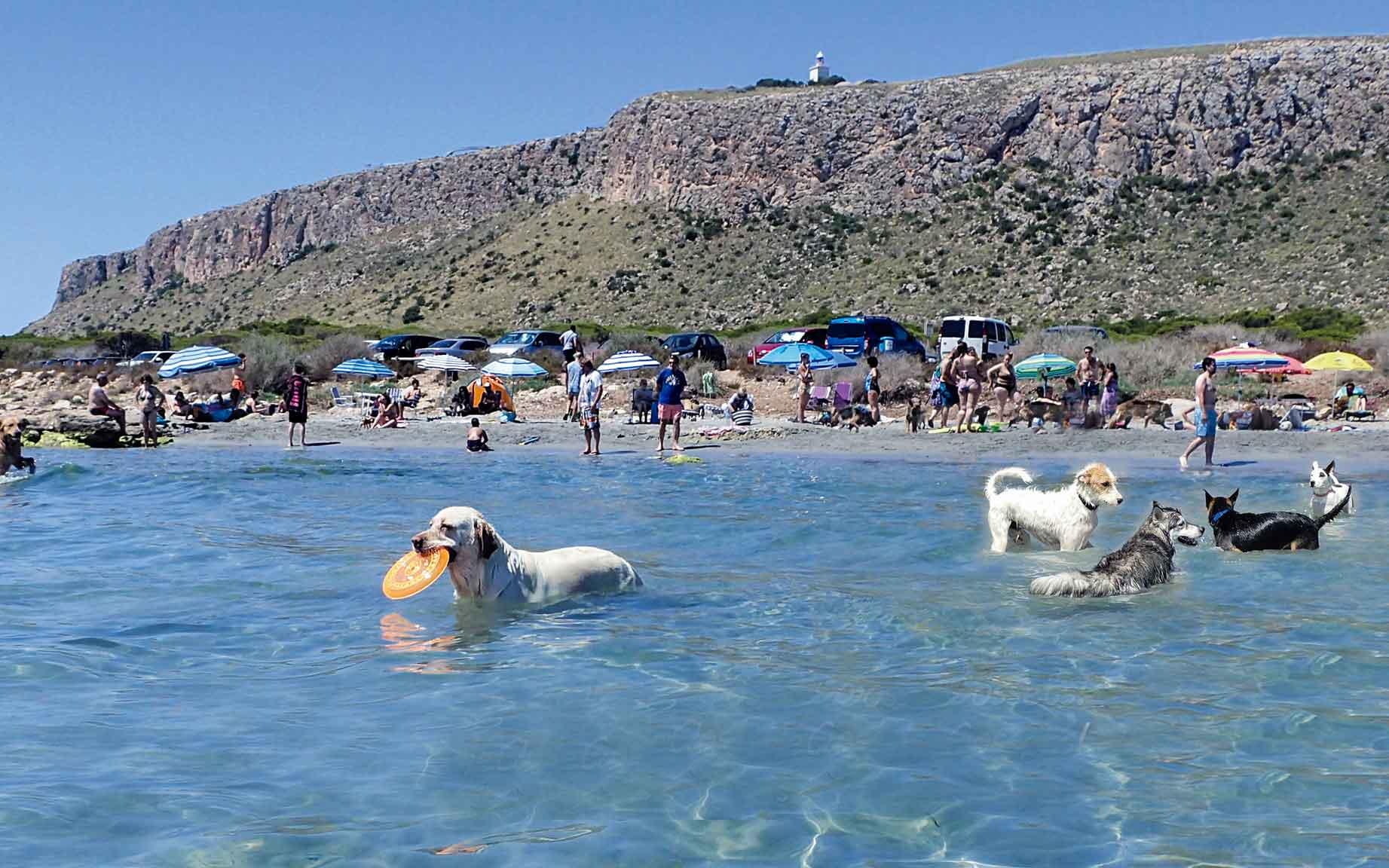 La Caleta dels Gossets de Santa Pola guanya el Premi Travelguau a la millor Destinació Turística Pet-friendly