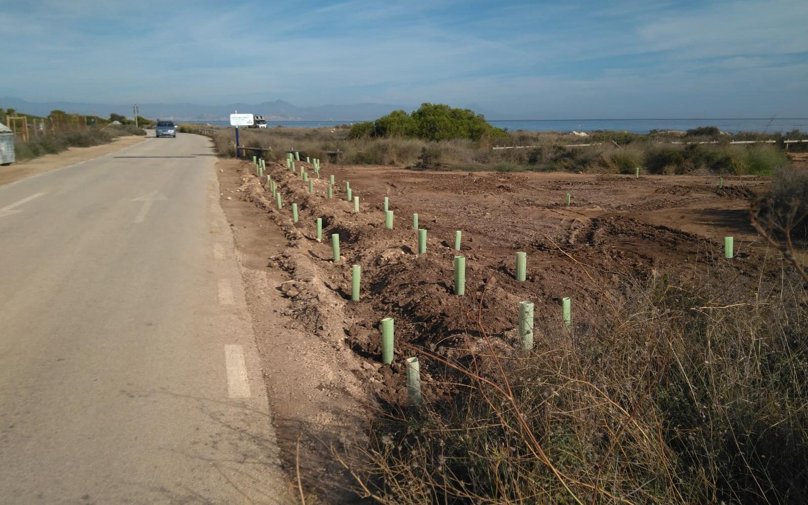 La Concejalía de Sostenibilidad ha comenzado las labores de regeneración ambiental del Frente Litoral del Cabo de Santa Pola